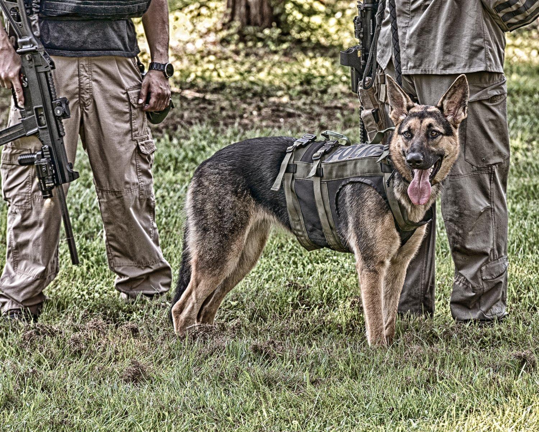 Canine Vest 10